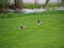 Ducks In Wildwood Preserve