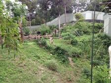 Dallas Zoo Chimpanzee Forest