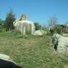 Dallas Zoo Lions
