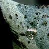 Finsch Diamond Mine