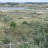 Duinen In Nationaal Park Zuid Kennemerland