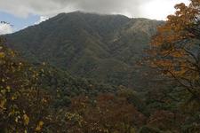Eaglenest Forests
