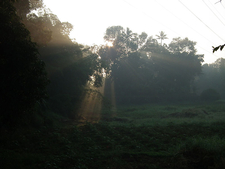Early Morning In Kottayam