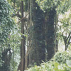 East Karbi Anglong Wildlife Sanctuary