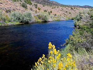 Este Walker River