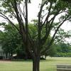 Eisenhower Center Grounds