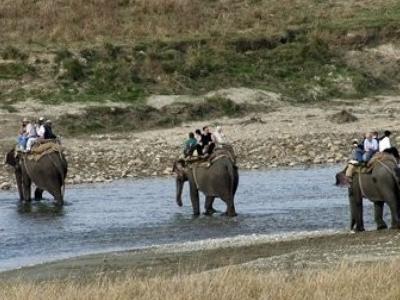 Elephants At Corbett