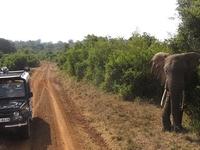 Safari Olpamara
