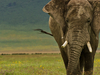 East Africa is Calling - You May Want to Visit Here Some Day