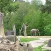 Elephant @ Auckland Zoo NZ