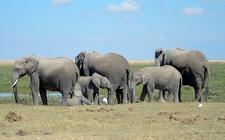 Elephant Family In Amboseli National Park - Kenya