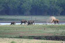 Elephant Family On The Banks Of Kabini River