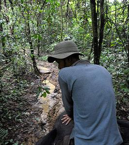 Elephant Jungle Patrol Near Tangkahan