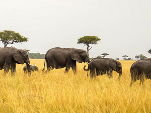10 Days 9 Nights Kenya - Tanzania Safari Package Fotos