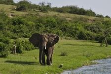 Elephant @ Mwanza TZ