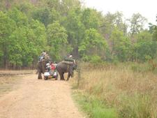 Elephant Ride Kanha National Park