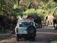 7 Days Elephant Safari