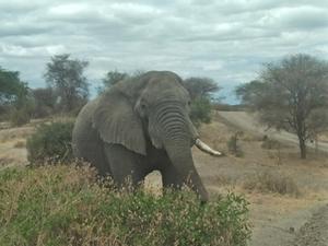 Tanzania Safari 6 Days