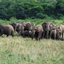 Elephants At Hluhluwe Game Park