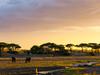 Elephants At Sunset, Ruaha National Park