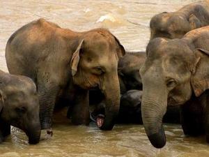Sur de Sri Lanka y el Tour Pico de Adán 10 días