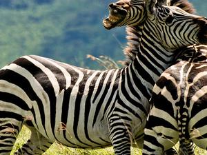 Budget Camping Safari Manyara, Serengeti & Ngorongoro Fotos