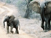 Elephants Crossing Road In Tsavo East