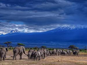 Kenya Safari Package Photos