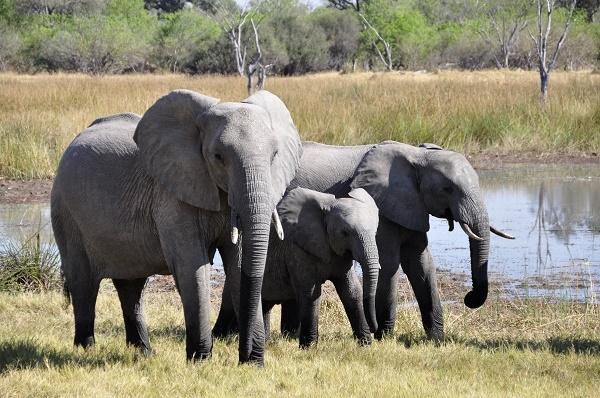 8 Day Luxury Kenya Safari Photos