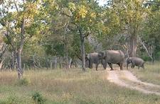 Elephants In Bandipur National Park