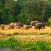 Northern Corridor Drive Safari - Uganda