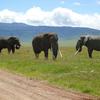 4 Day Tanzania Tented Camp Safari