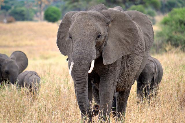 Safari Tanzania - Northern Circuit Photos