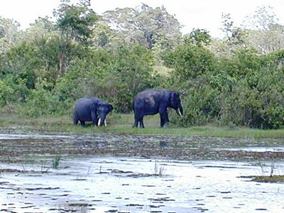 Elephants In The Way Kambas Conservation Centre