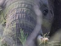 Wildlife Short Lodge Safari - Tanzania