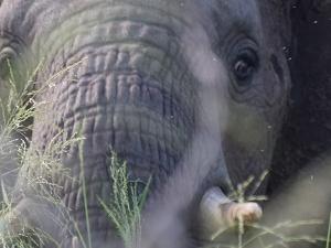 Wildlife Short Lodge Safari - Tanzania Fotos