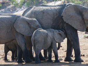 Namibia - Botswana - Victoria Falls Tour Fotos