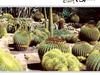 El Huerto Del Cura Garden Elche
