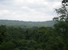 El Zotz - Petén Department - Guatemala