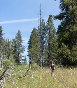 Emma Matilda Lake Trail At Grand Tetons - Wyoming - USA