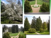 English Park And Botanical Garden-Lengyel