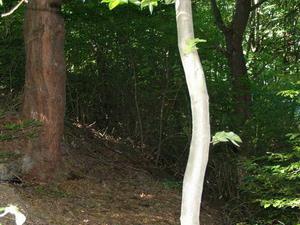 Erdőbénye Sylvpasture Reserva Natural