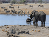 15 Days - Wildlife Safari In Namibia