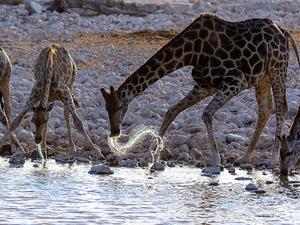 Best of Etosha Park Photos