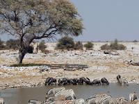 Etosha Safari Package