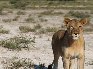 3 Days Etosha National Park Photos