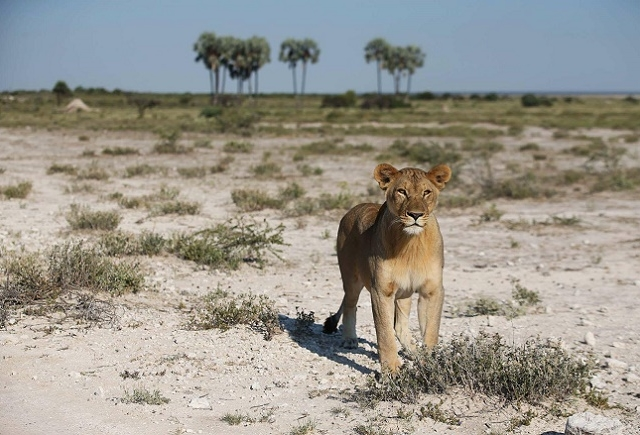 3 Days Etosha National Park Photos