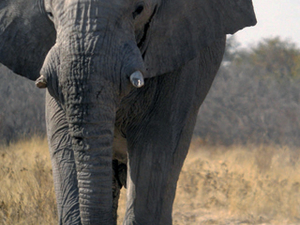 Classic Namibia Green Season Special Safari Photos