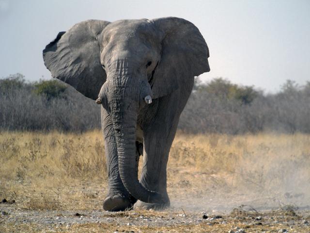 Special Classic Namibia Safari Photos