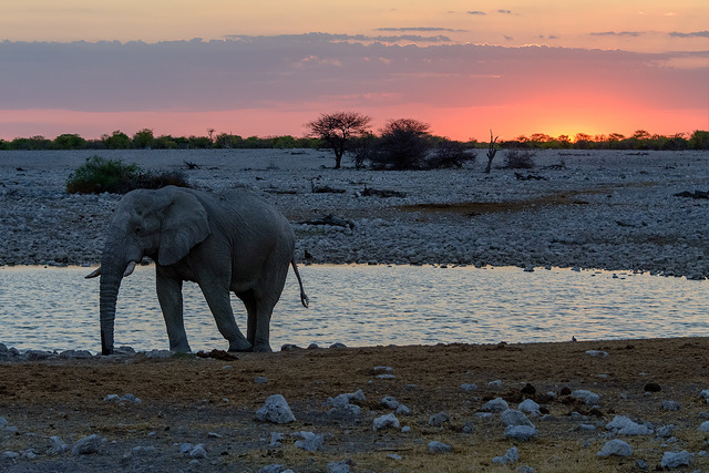Self-Drive Safari Photos